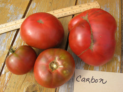 Tomate Carbon - Semences