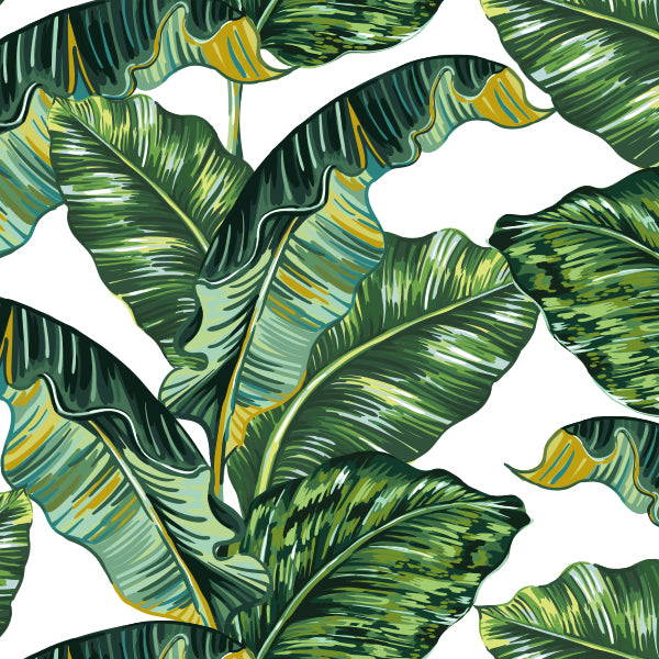 Leaves banana wallpaper