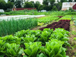 Let's Get Growing Together - The Ottawa Farm Fresh Gardening Series