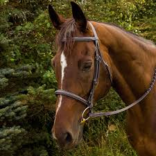 HDR Advantage Fancy Stitched Bridle