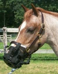 Best Friend Clip On Grazing Muzzle