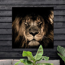 Load image into Gallery viewer, Schilderij-African Lion-PosterGuru