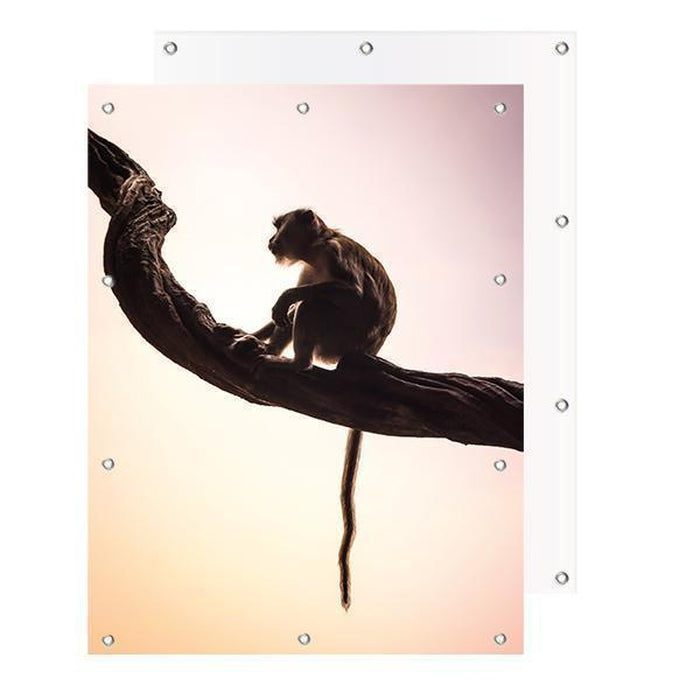 Schilderij-Little Monkey-PosterGuru