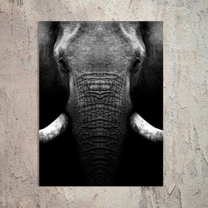 Schilderij-Olifant Close Up-PosterGuru