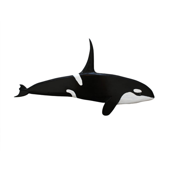 Orca whale hand carved and painted in Stephenville, Newfoundland and Labrador.