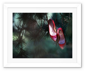 Framed print with white border of pair of ruby coloured ladies high heeled shoes hung from branch of a green mistletoe tree
