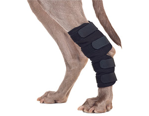 Back On Track Therapeutic Dog Hock Brace-Dog-Back On Track-ReRide Consignment LLC