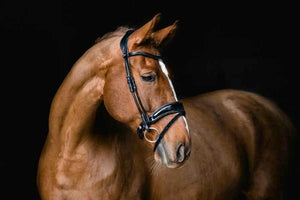 PS of Sweden Flying Change Deluxe Bridle-English Bridle-PS of Sweden-ReRide Consignment LLC