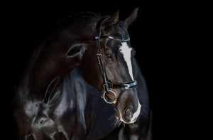 PS of Sweden Jump Off Bridle - ReRide Consignment