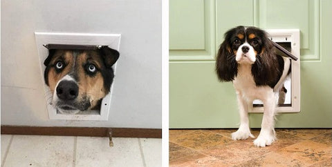 Image showing small dog going through the cat door easily but big dogs can only fit their head through