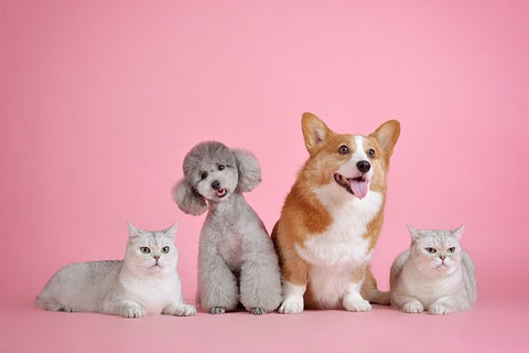 Happy dogs and cats on pink background