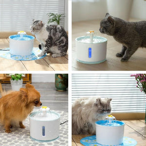 Four images showing 3 cats and 1 small dog drinking from the cat water fountain