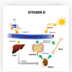 Vitamin D and our immune system, and how it may support us against COVID19