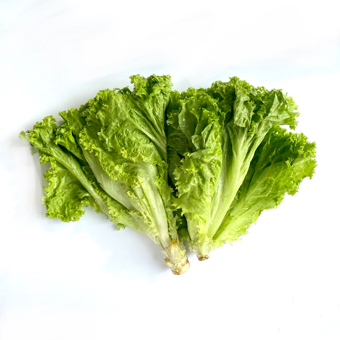 Lettuce Green Ice - SAVVYS