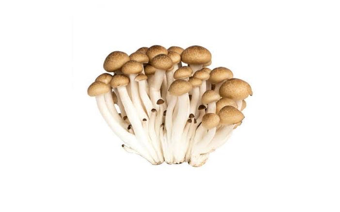 Mushroom - Brown Shimeji -150g - Savvy's Online Palengke and Grocery Delivery Philippines