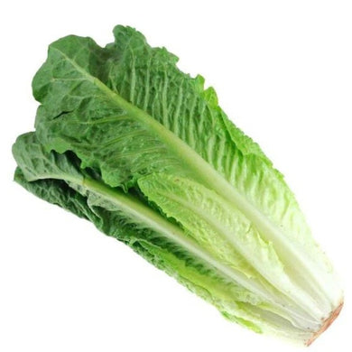 Lettuce Romaine - Savvy's Online Palengke and Grocery Delivery Philippines