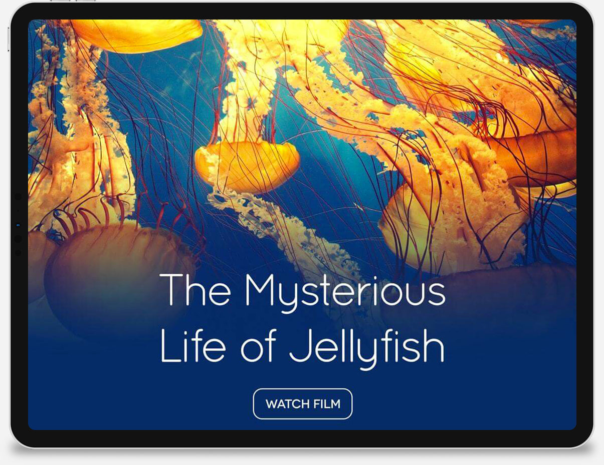 An iPad displaying a start screen to watch a film about jellyfish.
