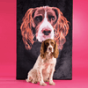 Spaniel dog sitting in front of a large pet blanket