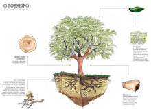 Carregar imagem no visualizador da galeria, PLANT A CORK OAK TREE | A Commitment with SUSTAINABILITY (covid19 safe| 1 purchase gives for2|Montado flavors offer)