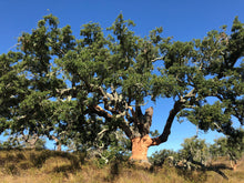 Carregar imagem no visualizador da galeria, ADOPT A CORK OAK TREE | Help MONTADO to prosper | Have a memory to last | Annual plans
