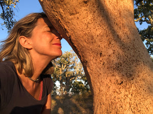 ADOPT A CORK OAK TREE | Help MONTADO to prosper | Have a memory to last | Annual plans