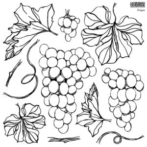 IOD Grapes Stamp **NEW!  Coming Soon!