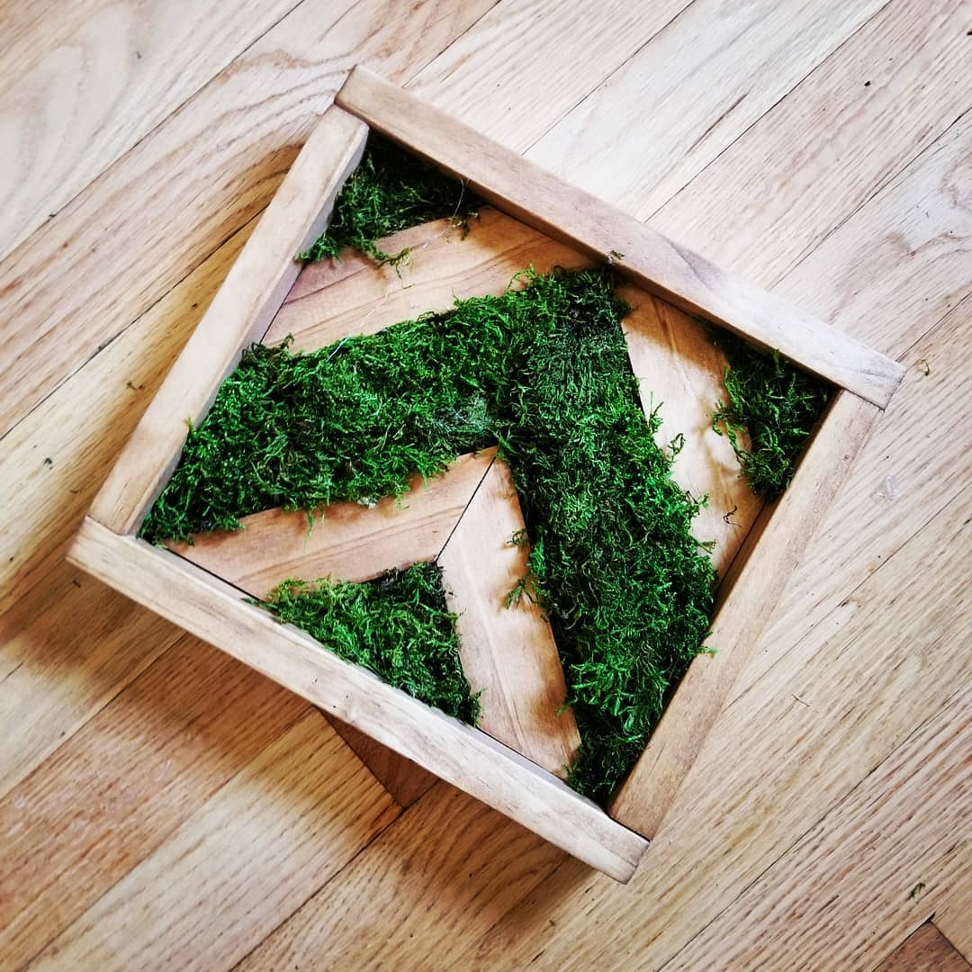Small Chevron Moss