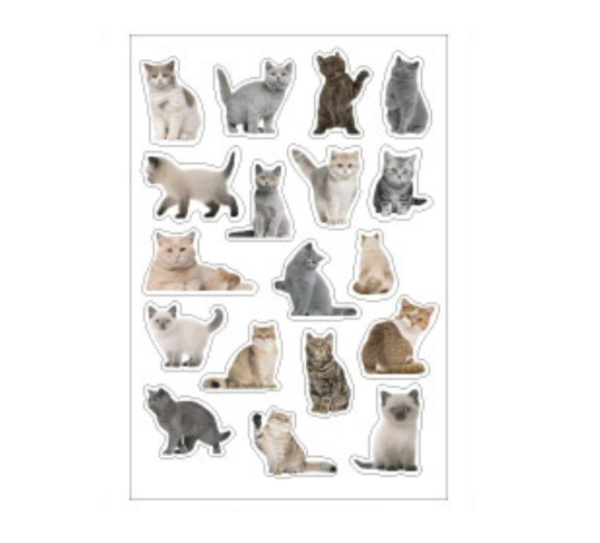 Translucent Cute Kitten Cat Stickers 36PCS - shop Stationery & Gifts store online