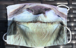 Youth Masks for Conservation - Animal Faces - Otter