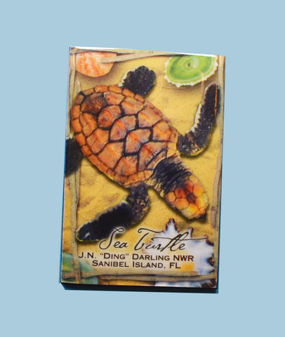 Wildlife Refrigerator Magnets - Loggerhead Hatchling