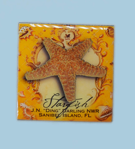 Wildlife Refrigerator Magnets - Sea Star