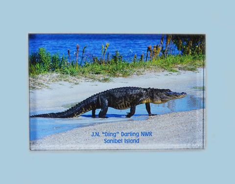 Photo Magnets - Alligator