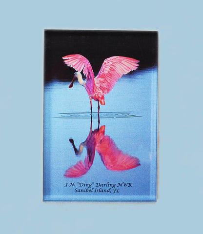 Photo Magnets - Spoonbill