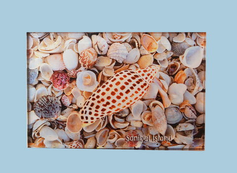 Photo Magnets - Junonia