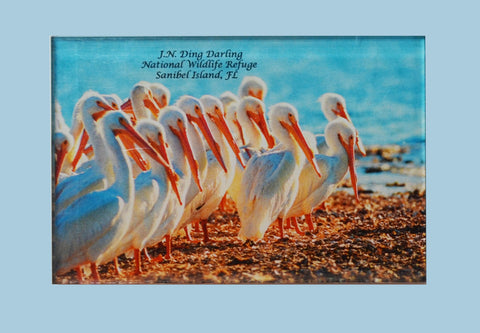Photo Magnets - White Pelicans
