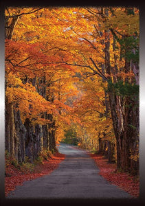 Autumn Road Blank Note Card