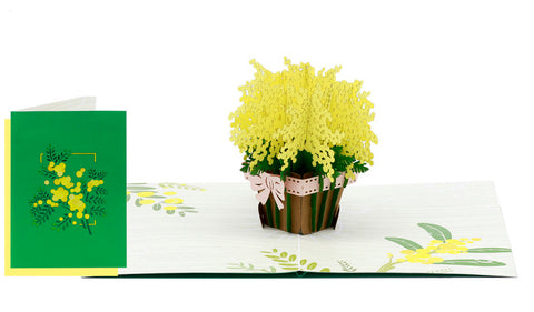 Mimosa in Pot Pop-Up Card
