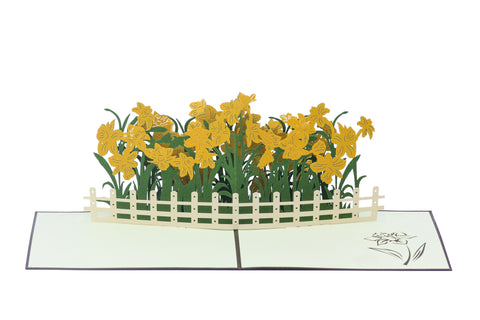 Daffodils Pop-Up Card