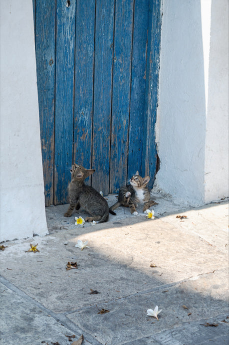 Cats of Greece 2 - T.Wilsher Photography