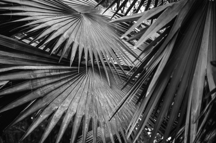 Palms - T.Wilsher Photography