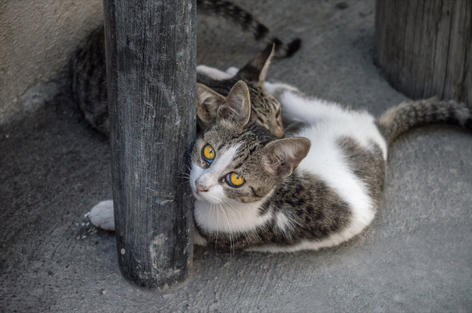 Cats of Greece 1 - T.Wilsher Photography