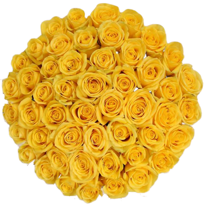 Bulk Yellow Roses 96 Stems
