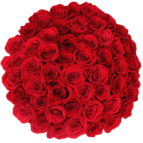 Bulk Red Roses 96 Stems