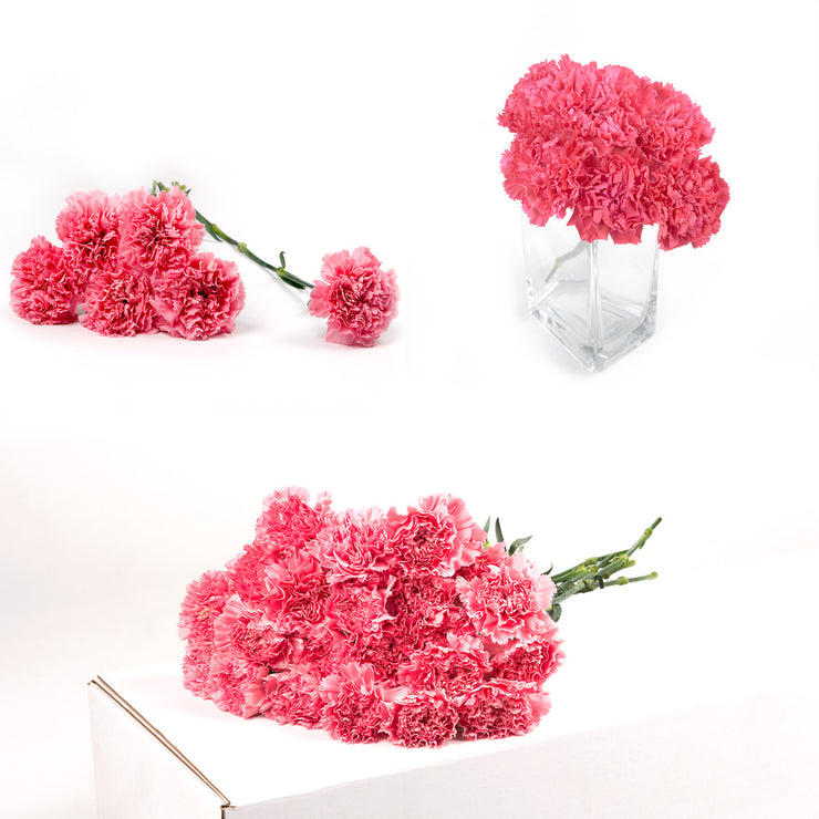 Bulk Pink Carnations 150 Stems