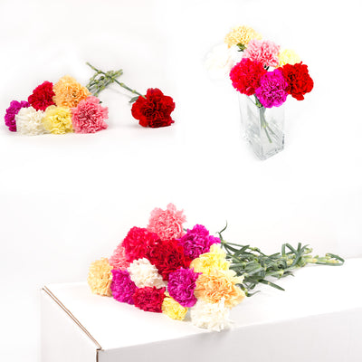 Bulk Assorted Carnations 150 Stems