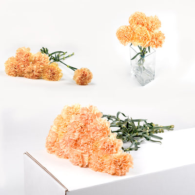 Bulk Orange Carnations 150 Stems