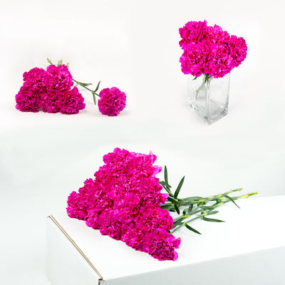 Bulk Hot Pink Carnations 150 Stems