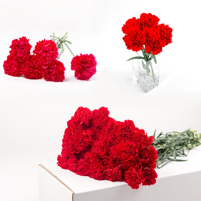 Bulk Red Carnations 150 Stems