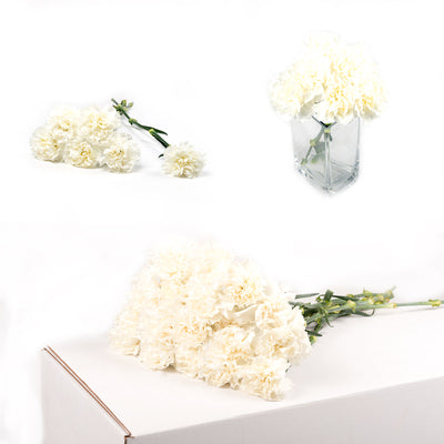 Bulk White Carnations 150 Stems