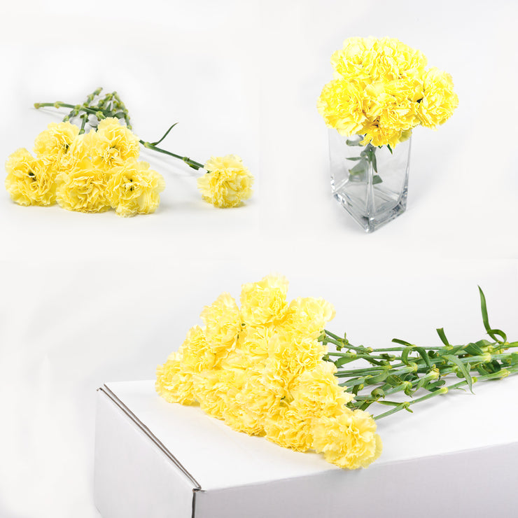 Bulk Yellow Carnations 150 Stems